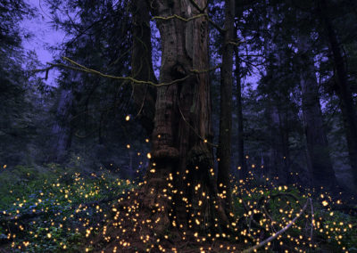 Embers and the Giants
